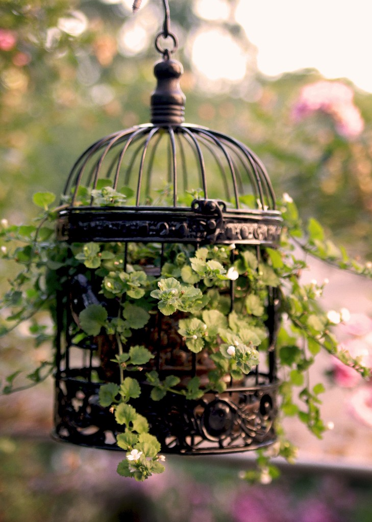 How to use a decorative bird cage the radish patch for Plante verte decorative