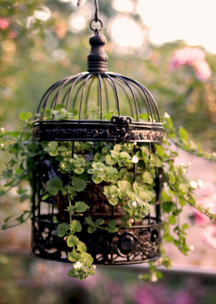 Repurposing Decorative Bird Cages