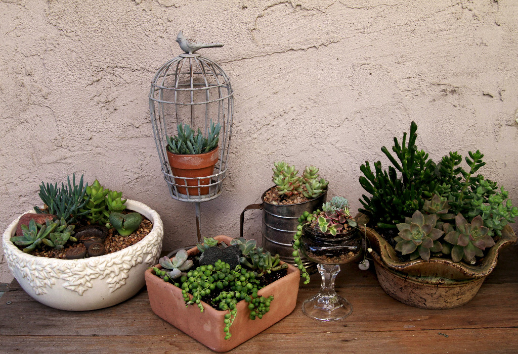 Succulent Designs Fun With Unusual Containers The