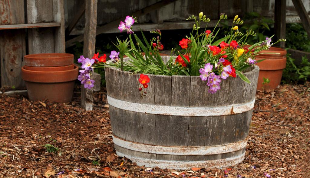 How to Brighten Up Your Garden
