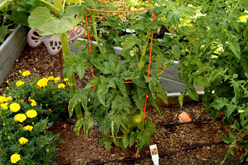 IMG_9565 Better bush